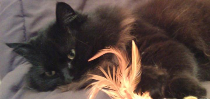 RIP Lady Mew